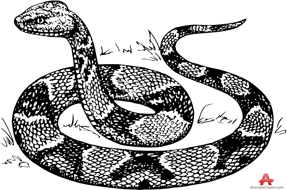 Line Drawing Snake : Snake pencil drawing at getdrawings free for