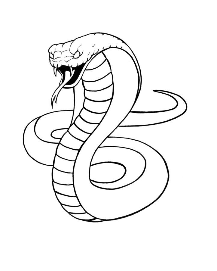 It's just a picture of Vibrant Snake Skin Drawing Easy
