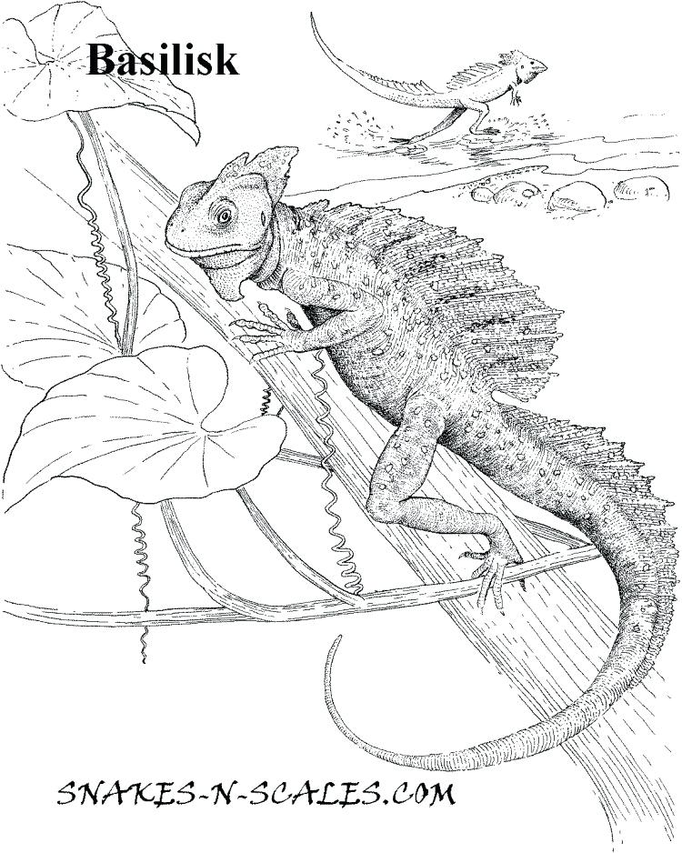 750x938 Reptiles Coloring Pages Reptiles Snakes With Tail Much Coloring