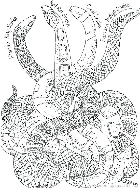 570x767 Coloring Pages Snakes Drawn Snake Colouring Page Coloring Pages