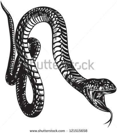 Snake With Mouth Open Drawing