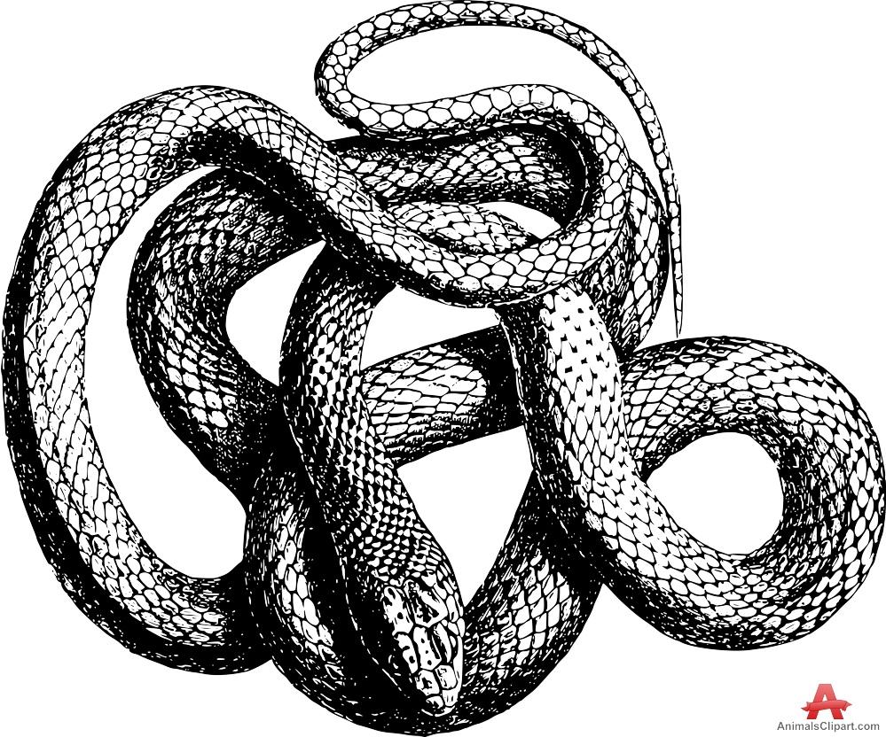 999x832 Big Snake Cliparts