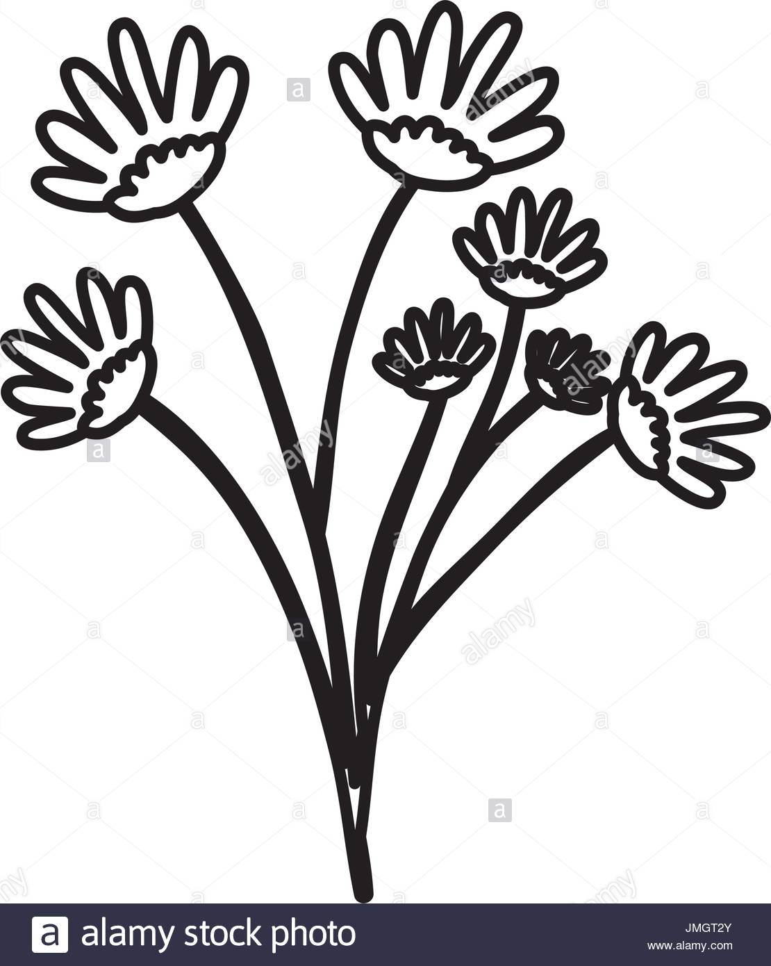 1110x1390 Delicate Flower Sketch Stock Photos Amp Delicate Flower Sketch Stock