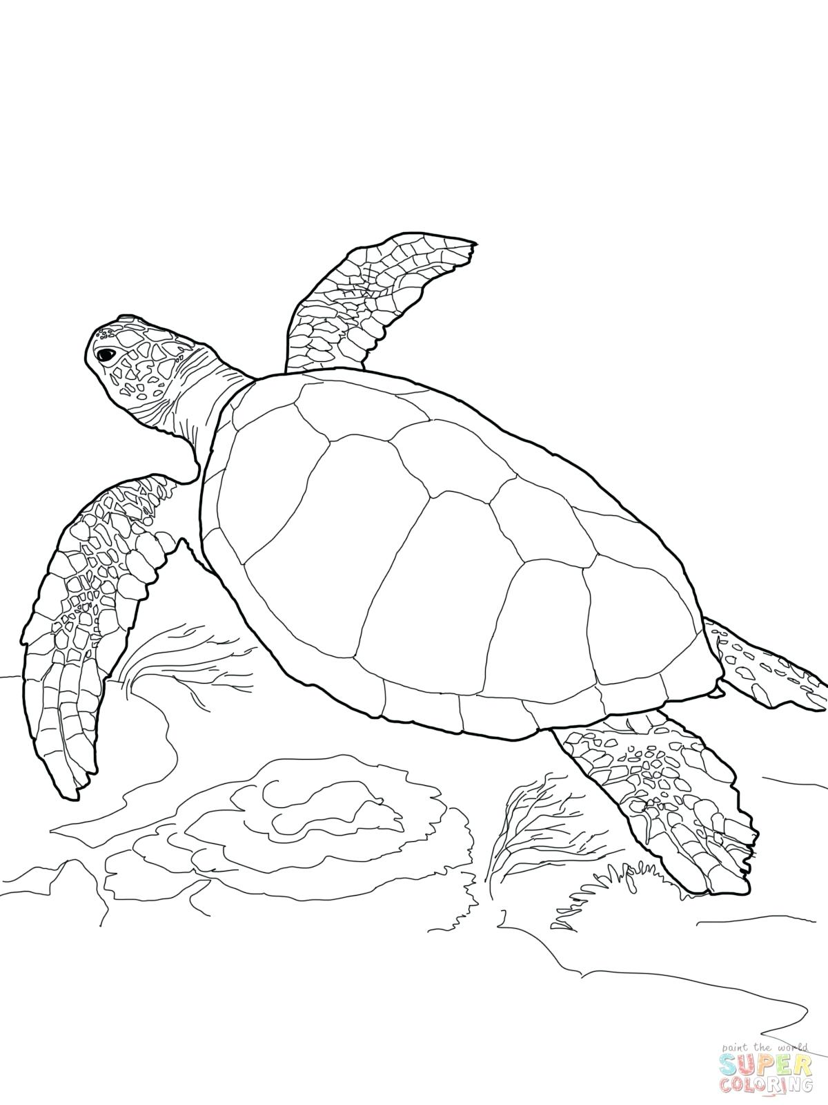 1200x1600 coloring snapping turtle coloring pages
