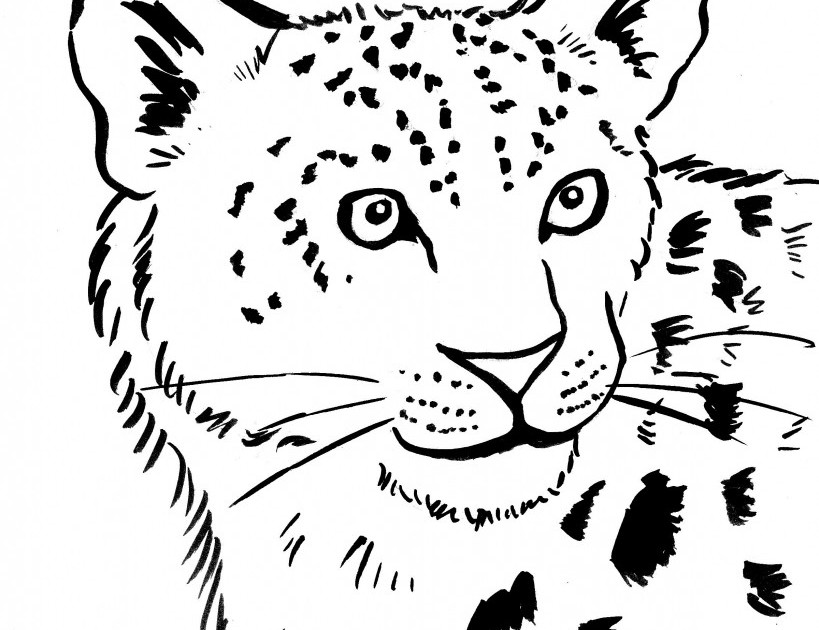 819x630 Snow Leopard Coloring Page