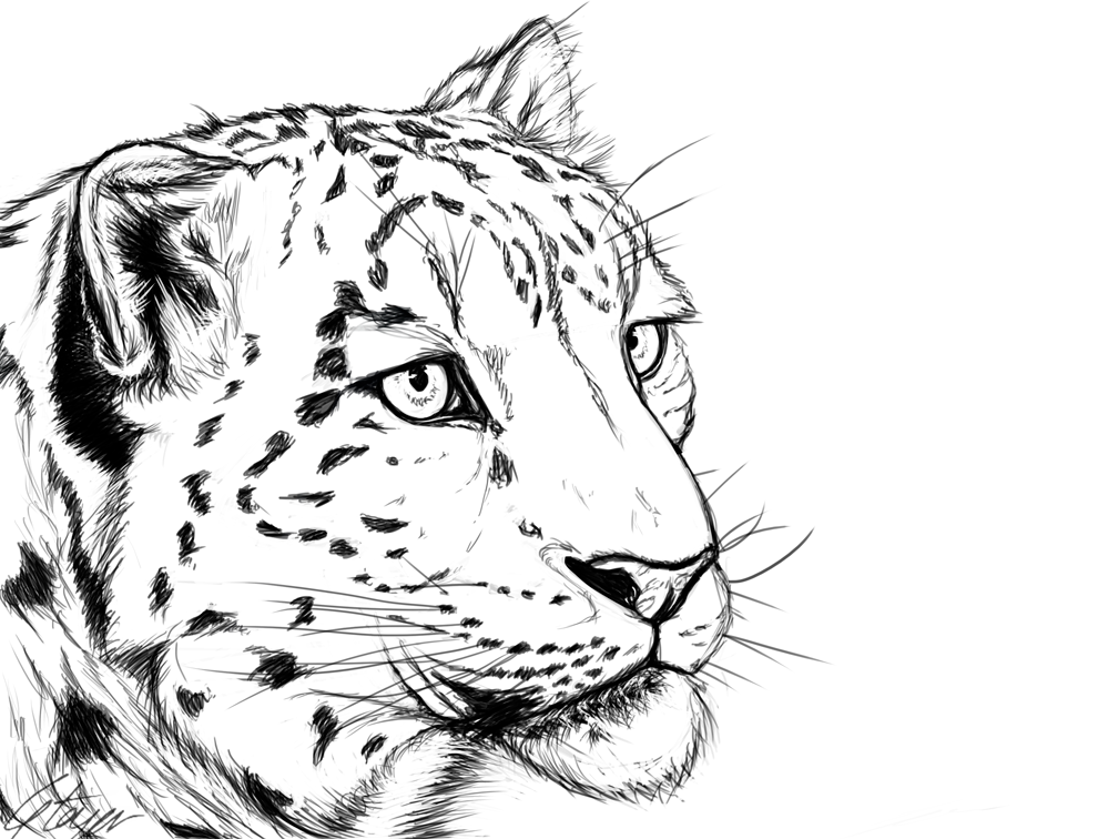 990x756 Snow Leopard By Tawned