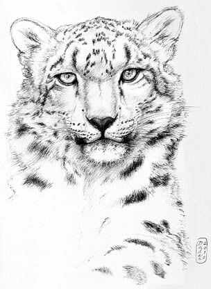 304x416 The Best Snow Leopard Drawing Ideas On Snow