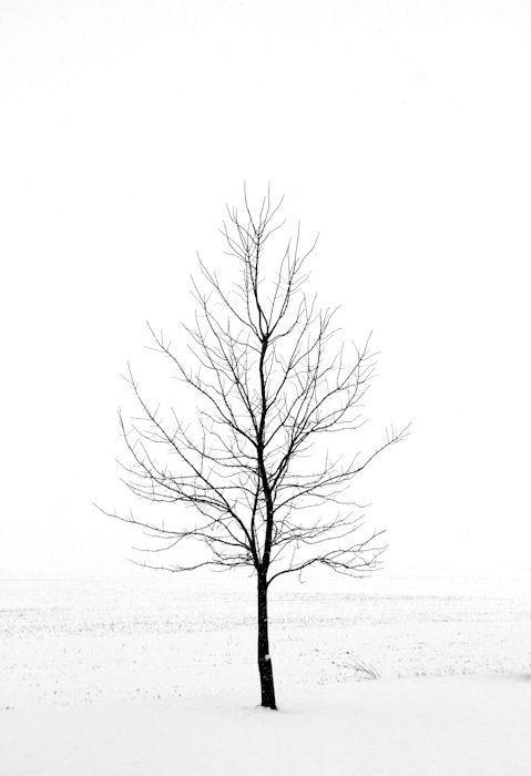 479x700 Minimalist Art Winter Landscape Photography By Hockmanphotography