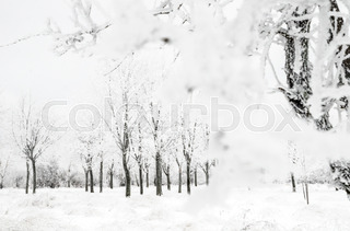320x211 Small Meadow Covered By Snow And Trees On Background