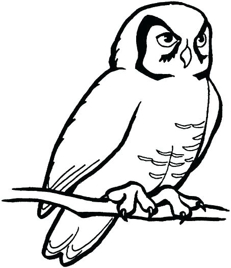 453x525 Snowy Owl Coloring Page Owl Outline Drawing Cartoon Snowy Owl