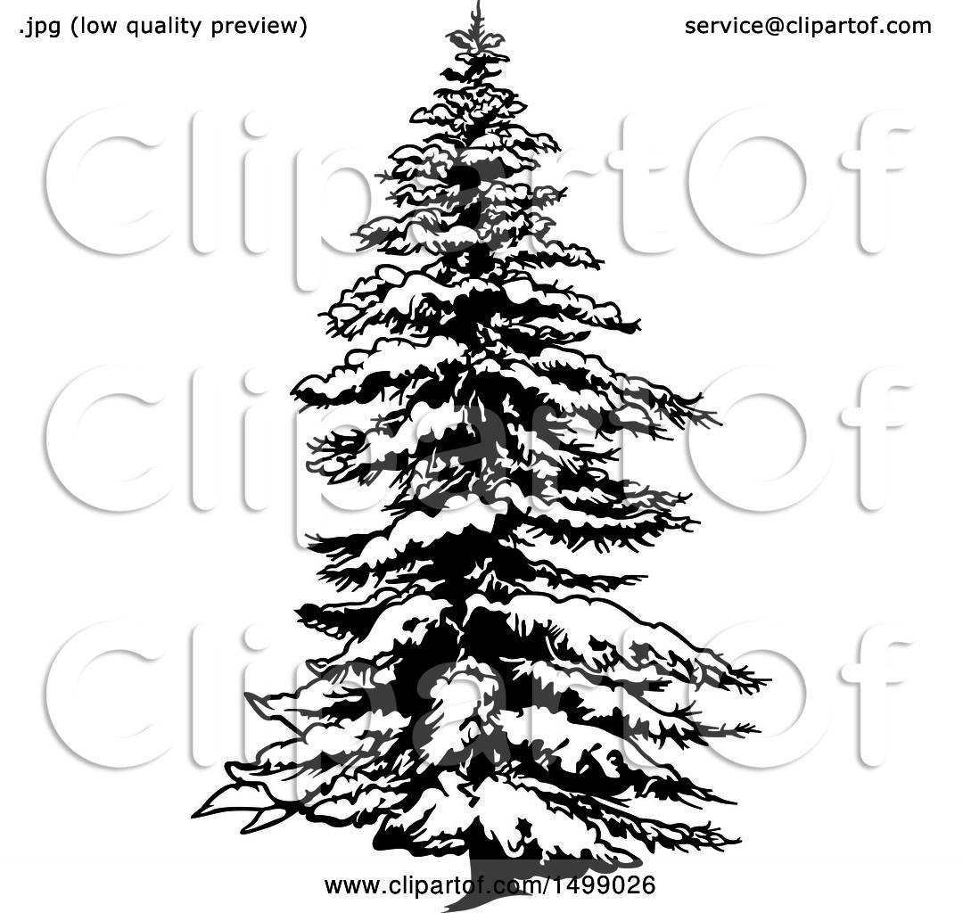 1080x1024 Clipart Of A Snow Flocked Evergreen Tree