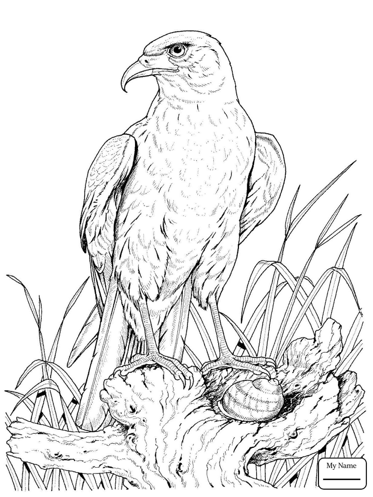 Soaring Eagle Drawing at GetDrawings | Free download