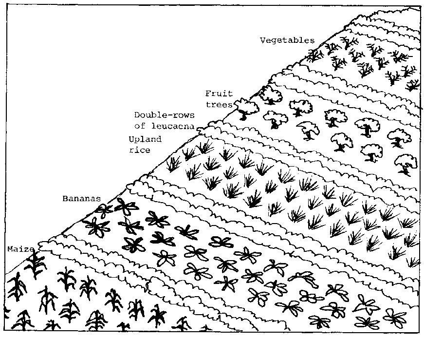 Schematic Diagram Of Different Types Of Soil Erosion And Manual Guide