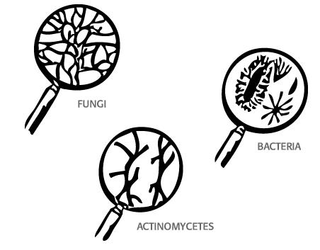452x353 Efficient Fertilizer Use Guide Soil Defined Mosaic Crop Nutrition