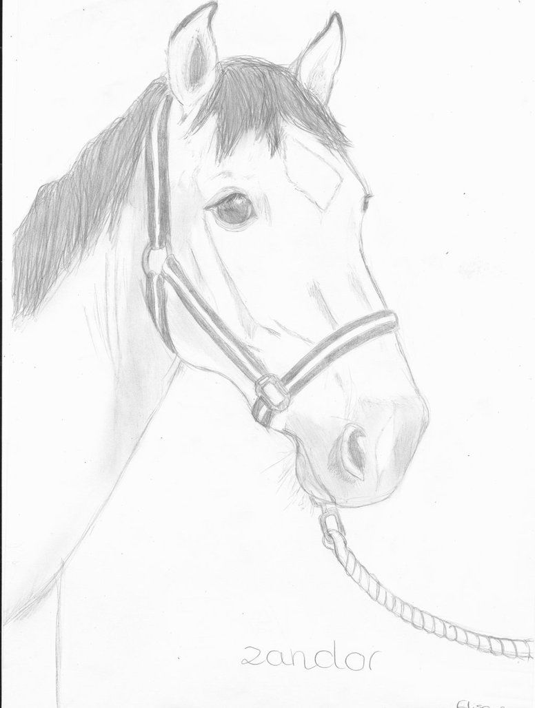 776x1028 Horse Drawing For Someone ) By Elisa Esprit