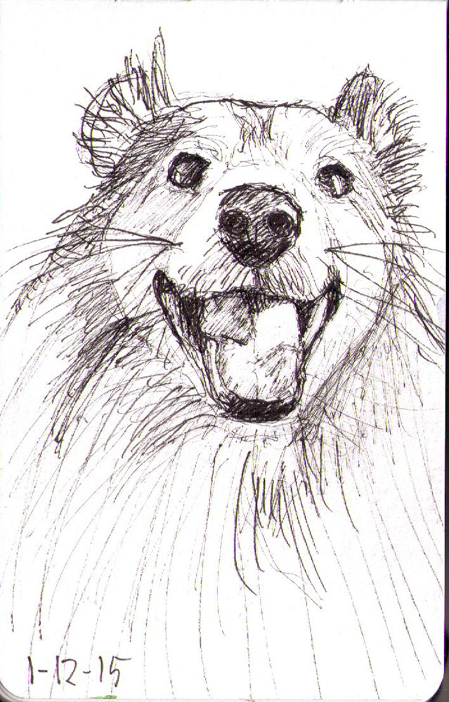639x1000 Sketch Of A Happy Sheltie Dog! One Drawing Daily