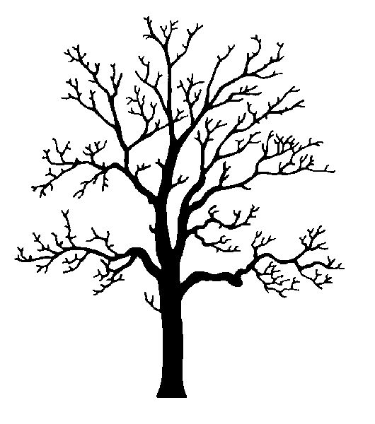 530x600 Coloring Pages Decorative Oak Tree Line Drawing Clip Art