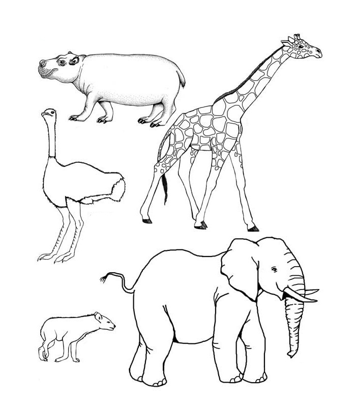 700x792 Image Result For African Animal Drawing Templates Nurturing
