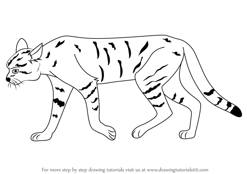 800x566 Learn How To Draw An African Wildcat (Wild Animals) Step By Step