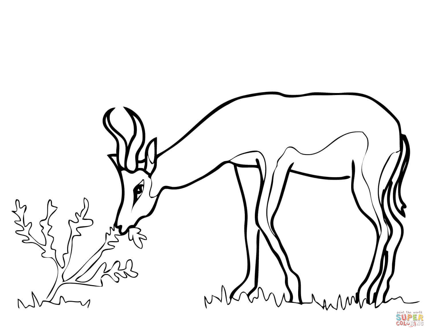 1500x1160 Springbok From South Africa Coloring Page Free Printable