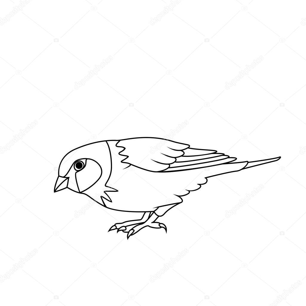 1024x1024 Coloring Book Sparrow Stock Vector Blackspring1