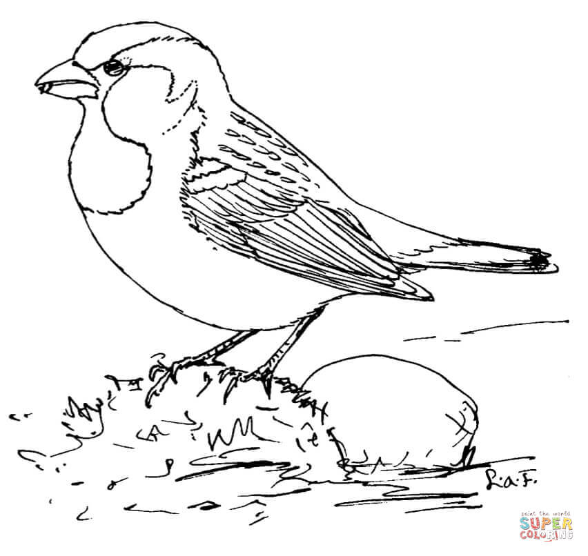 852x806 House Sparrow Coloring Page Free Printable Coloring Pages