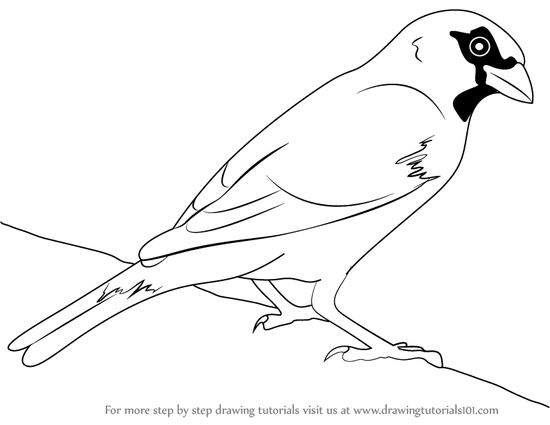 795x614 Learn How To Draw A House Sparrow (Birds) Step By Step Drawing