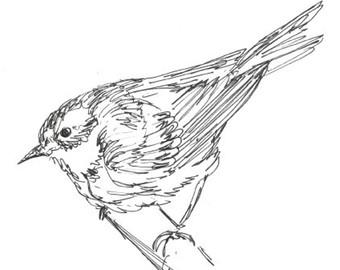 340x270 Original Bird Drawing Warbler In Pen Amp Ink 8x10