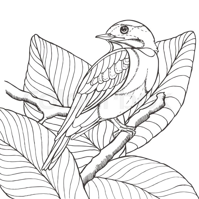 800x800 Sketch Of Tropical Bird Sitting On Branch In Leaves. Imitation