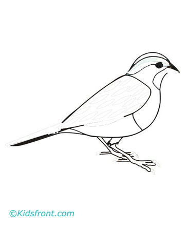 360x440 Sparrow Coloring Pages Printable