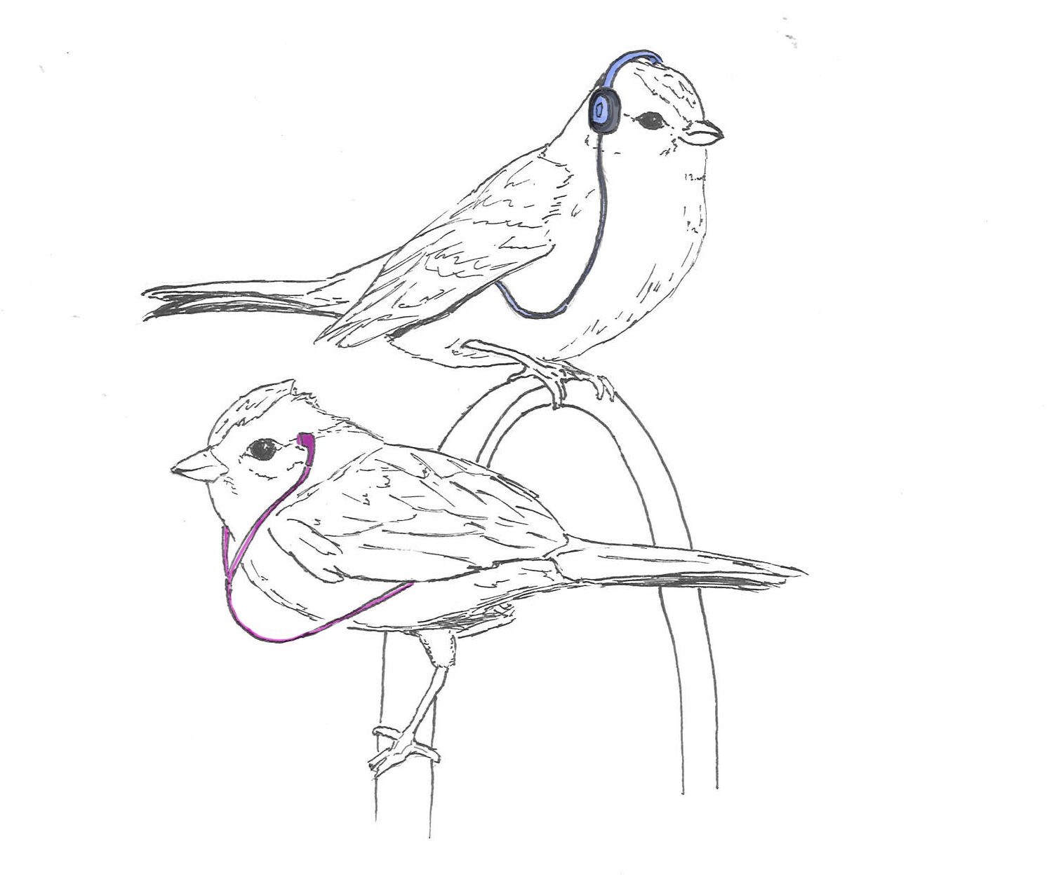 1512x1254 Unl Researchers Affirm Hypothesis Sparrows Can Learn Their Species