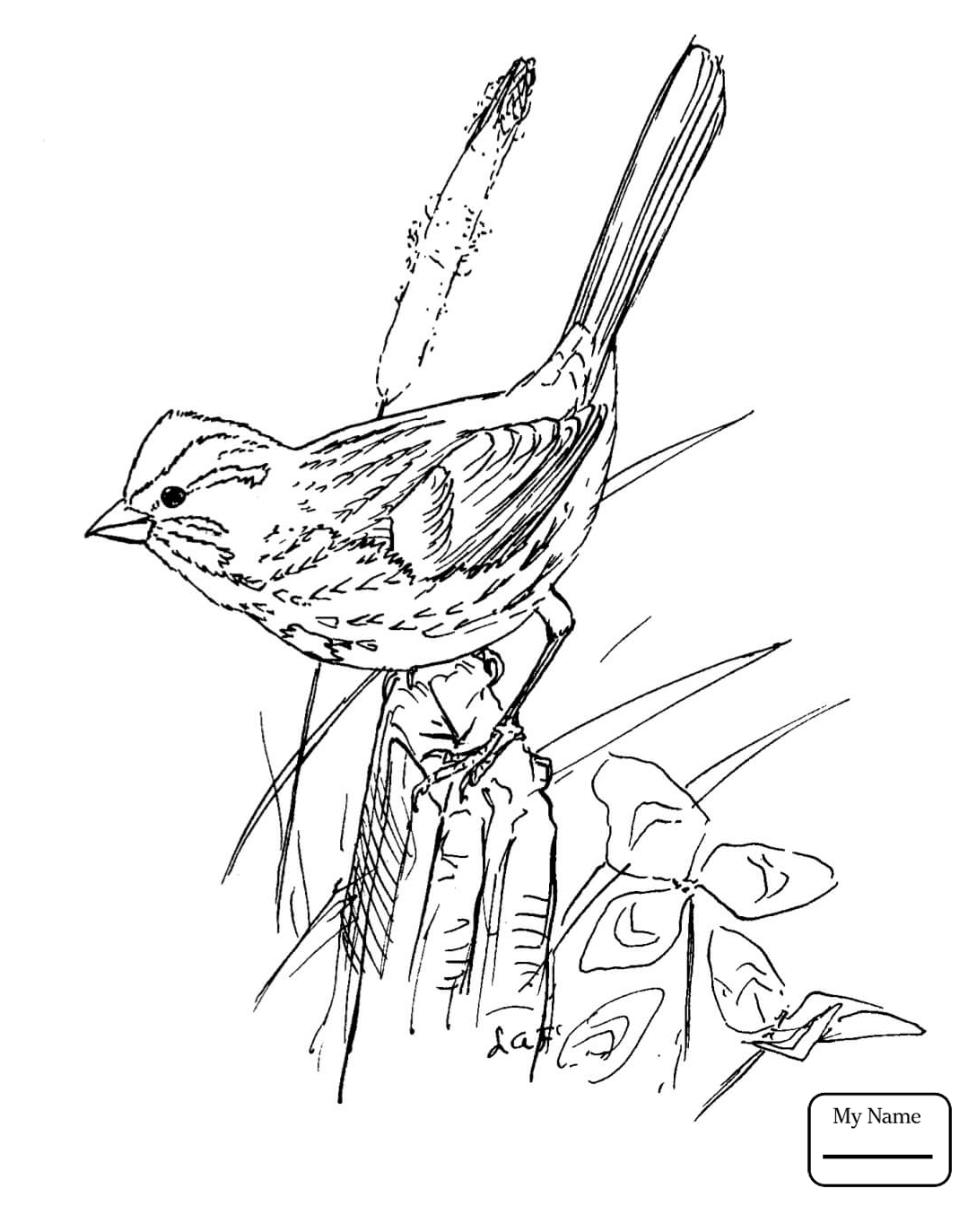 Sparrow Bird Drawing At GetDrawings