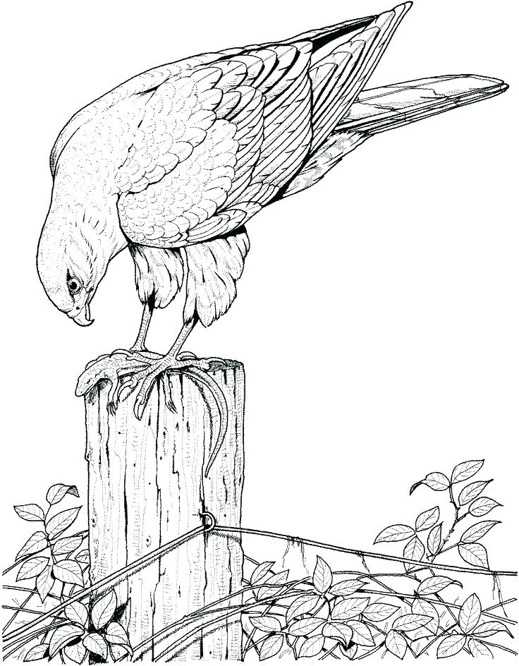 736x944 Coloring Pictures Of Birds Flying Sparrow Online Coloring Coloring
