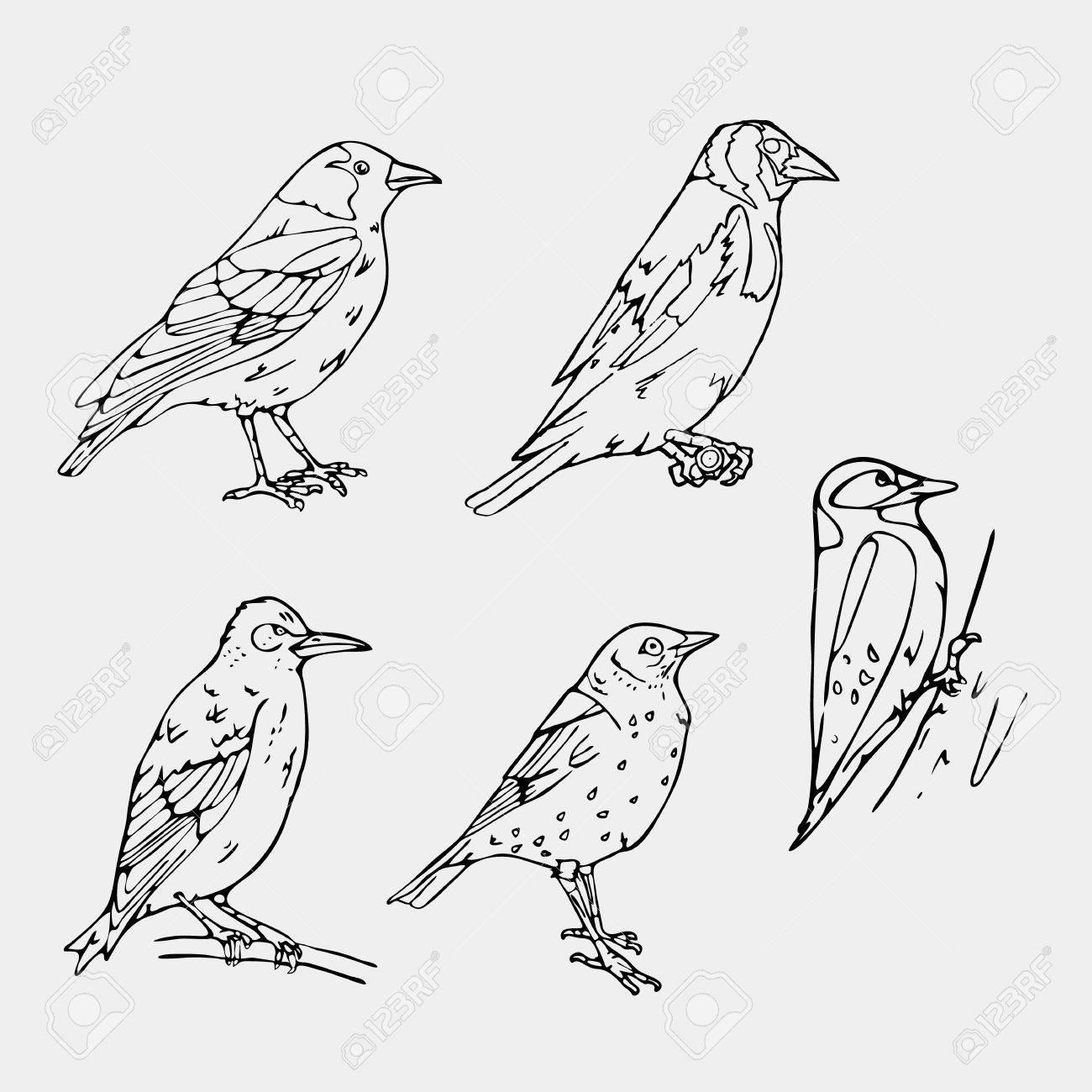 1300x1300 Birds Engraved Style. Set Emblem. Bird, Oriole, Chickadee, Sparrow