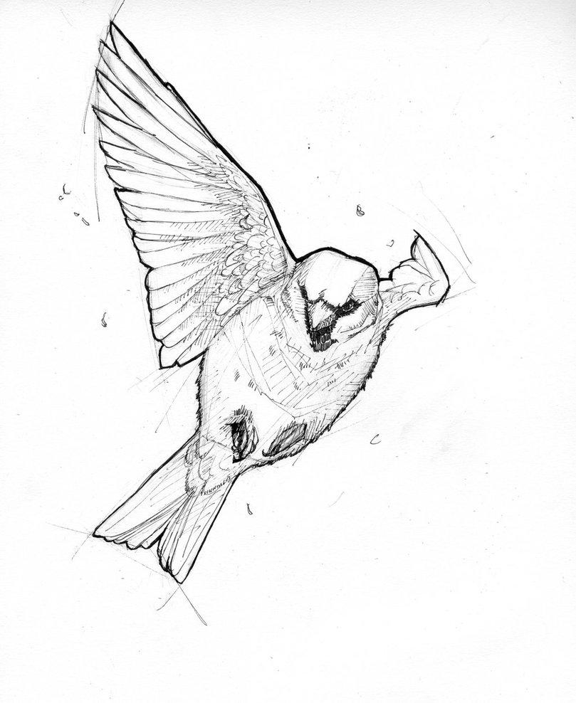 809x988 Sparrow