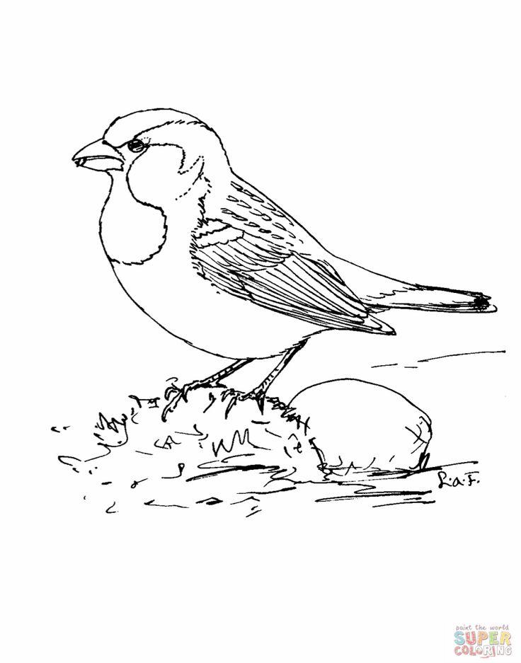 736x937 Sparrow Coloring Page 317745