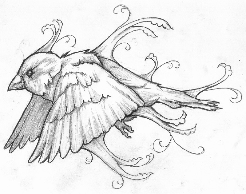 800x631 Traditional Sparrow Drawing
