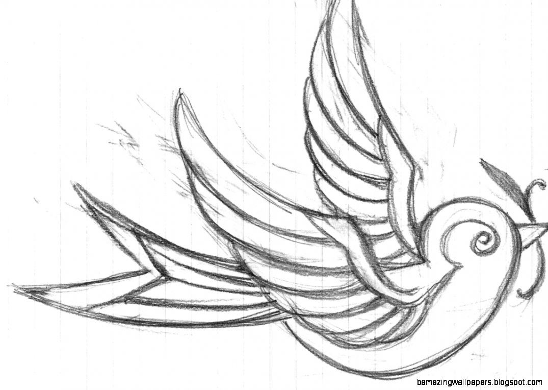 1075x764 Sparrow Drawing Tattoo Amazing Wallpapers