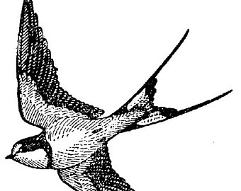 340x270 Vintage Sparrow Drawing