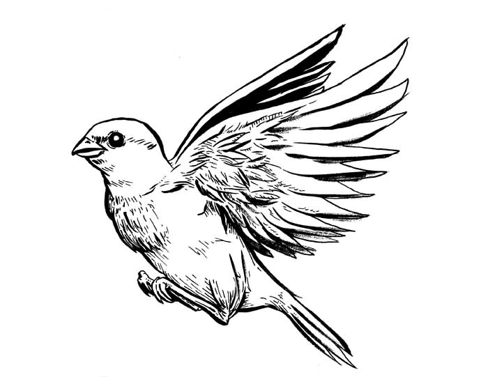 700x541 Awesome Grey Ink Sparrow Tattoo Design