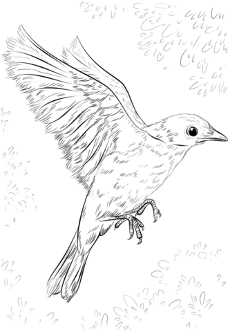 333x480 Blue Bird Flying Coloring Page Zentangle Coloriages