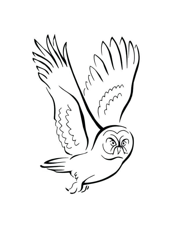 600x776 Coloring Pictures Of Birds Flying Sparrow Online Coloring Coloring