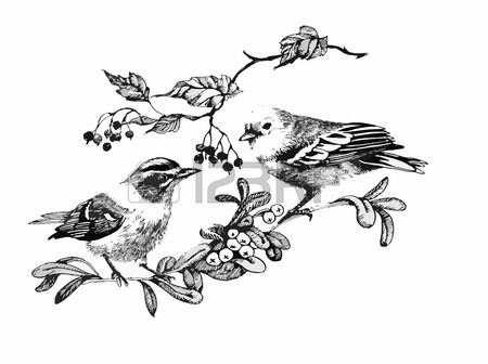 450x336 Figure Tit Bird Flying With Spread Wings, A Sketch Hand Drawn