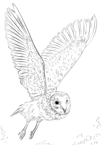 333x480 Barn Owl In Flight Coloring Page Free Printable Coloring Pages