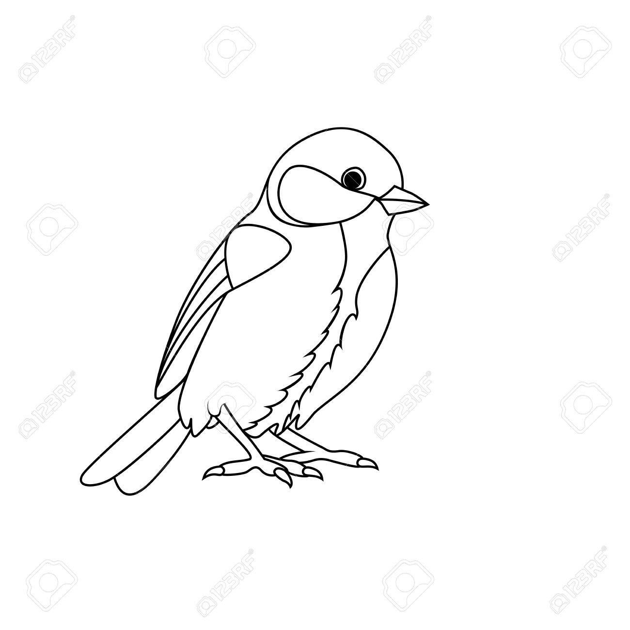 1300x1300 Bird Drawing Stock Photos. Royalty Free Business Images