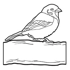230x230 10 Cute Sparrow Coloring Pages For Your Little One