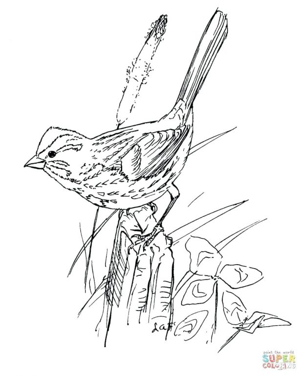 618x770 Images Outlines Of Birds In Line Drawings With Flight And Animals