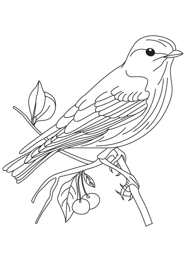 613x860 Sparrow Coloring Page Many Interesting Cliparts