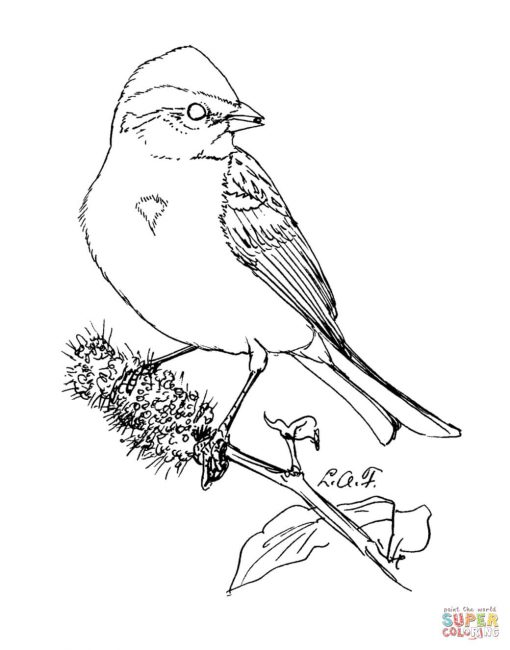 510x650 Sparrow Coloring Pages S8 Nice Coloring Pages For Kids