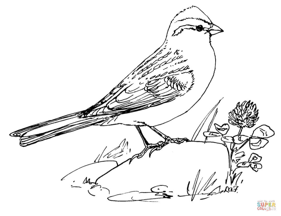 1162x892 Sparrows Coloring Pages Free Coloring Pages